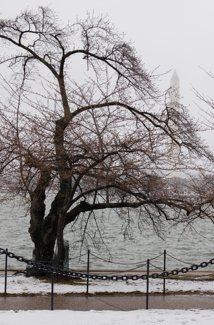 March 21, 2018 Tidal Basin DSC_1601