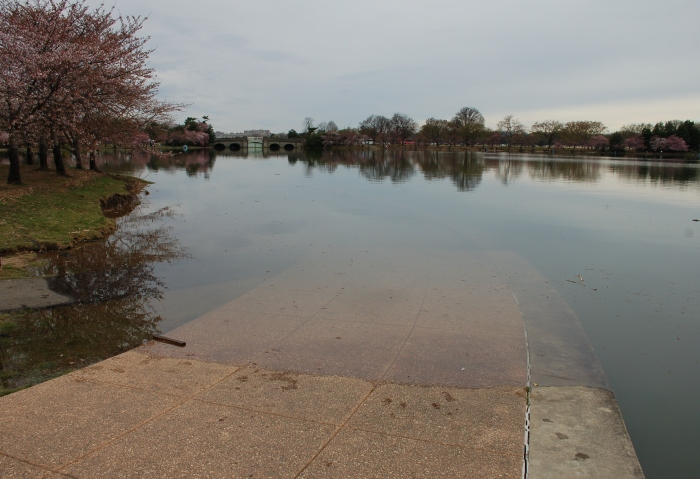 Tidal Basin Jeff mem 4-1-18 10:30 a morning after full moon DSC_1754
