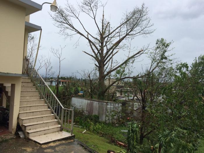 Puerto Rico Moca Ceiba Sept 21st 2017