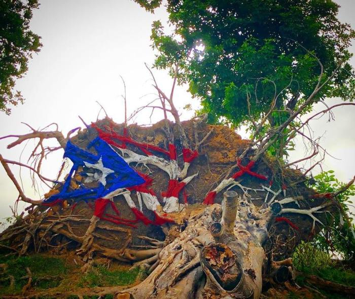 Puerto Rico PR Flag on downed tree August 2018