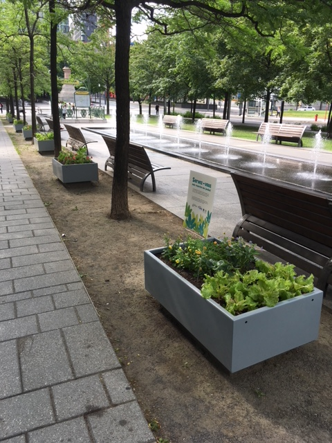 Montreal Plaza Garden July 2019 IMG_5481