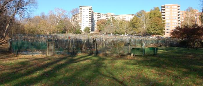 Glover Park Community Garden 11-16-19 DSC_0451